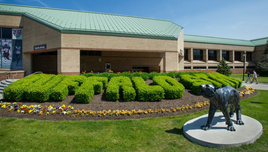"""Bengal statue in front of trimmed hedges that spell out """"Buffalo State."""""""